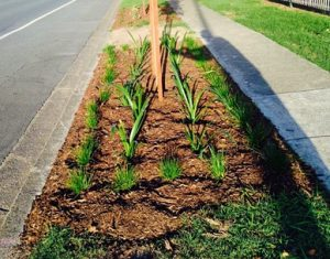 Brisbane Verge Gardens now supported in Residential Areas