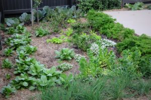 Community Compost Hubs seek your Organic Waste